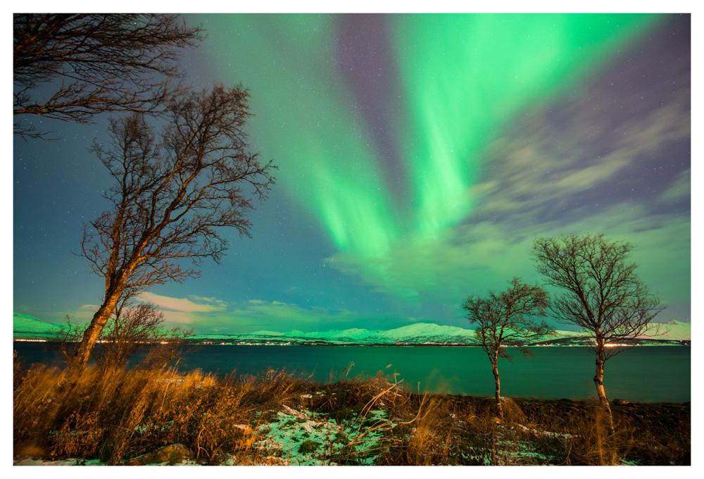 Nordlicht mit Bäumen