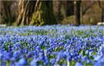 Nordpark in blau.