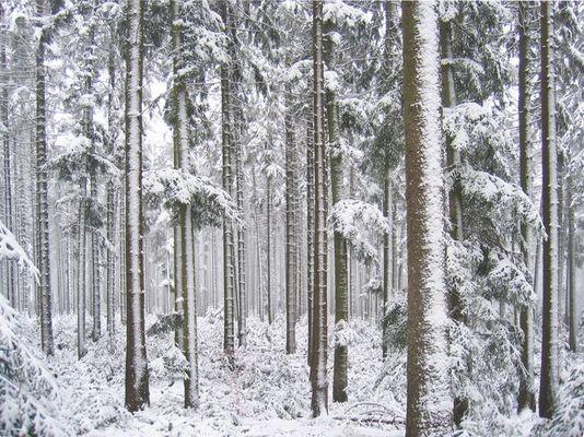 Nordschwarzwald bei Dennach im Winter
