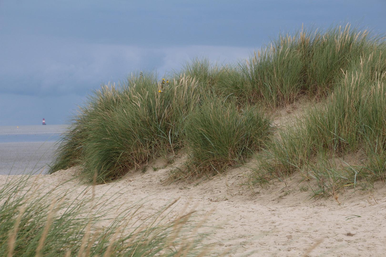 Nordsee Dünen