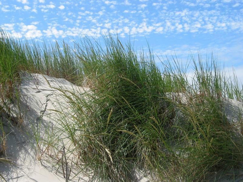 Nordsee-Insel Amrum