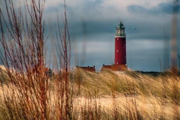 NORDSEE - Texel