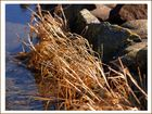 Nordsee-Uferrandgestrüpp...