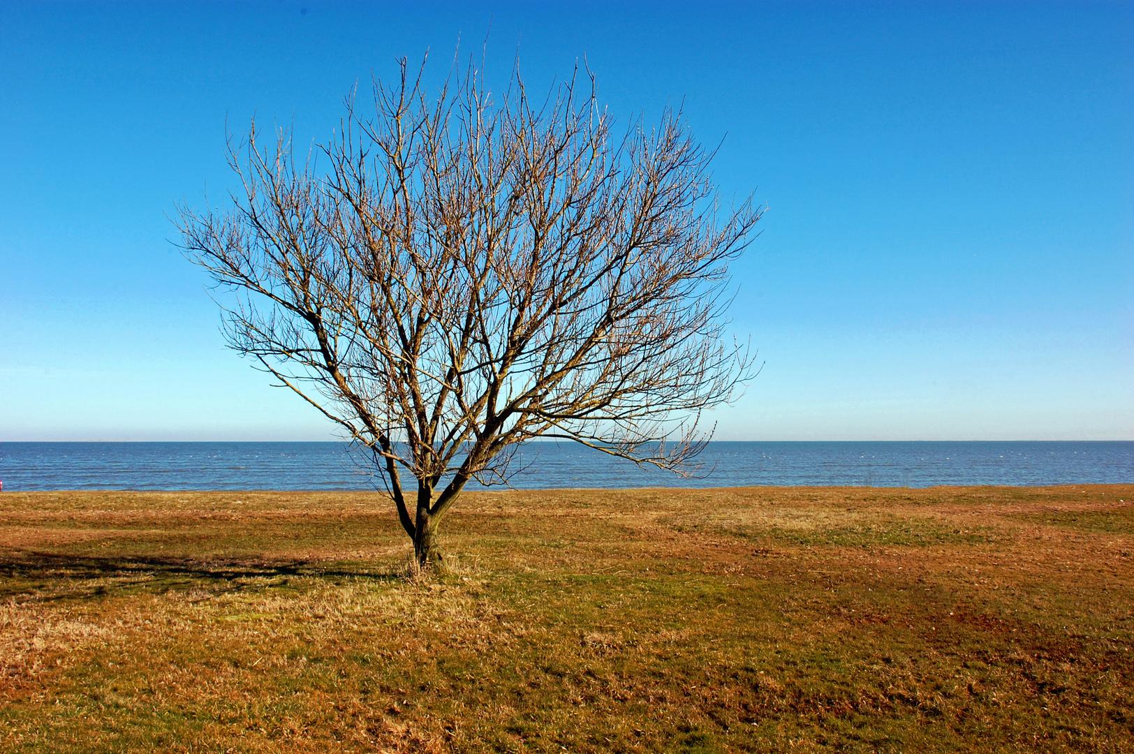 Nordseeküste bei Schillig