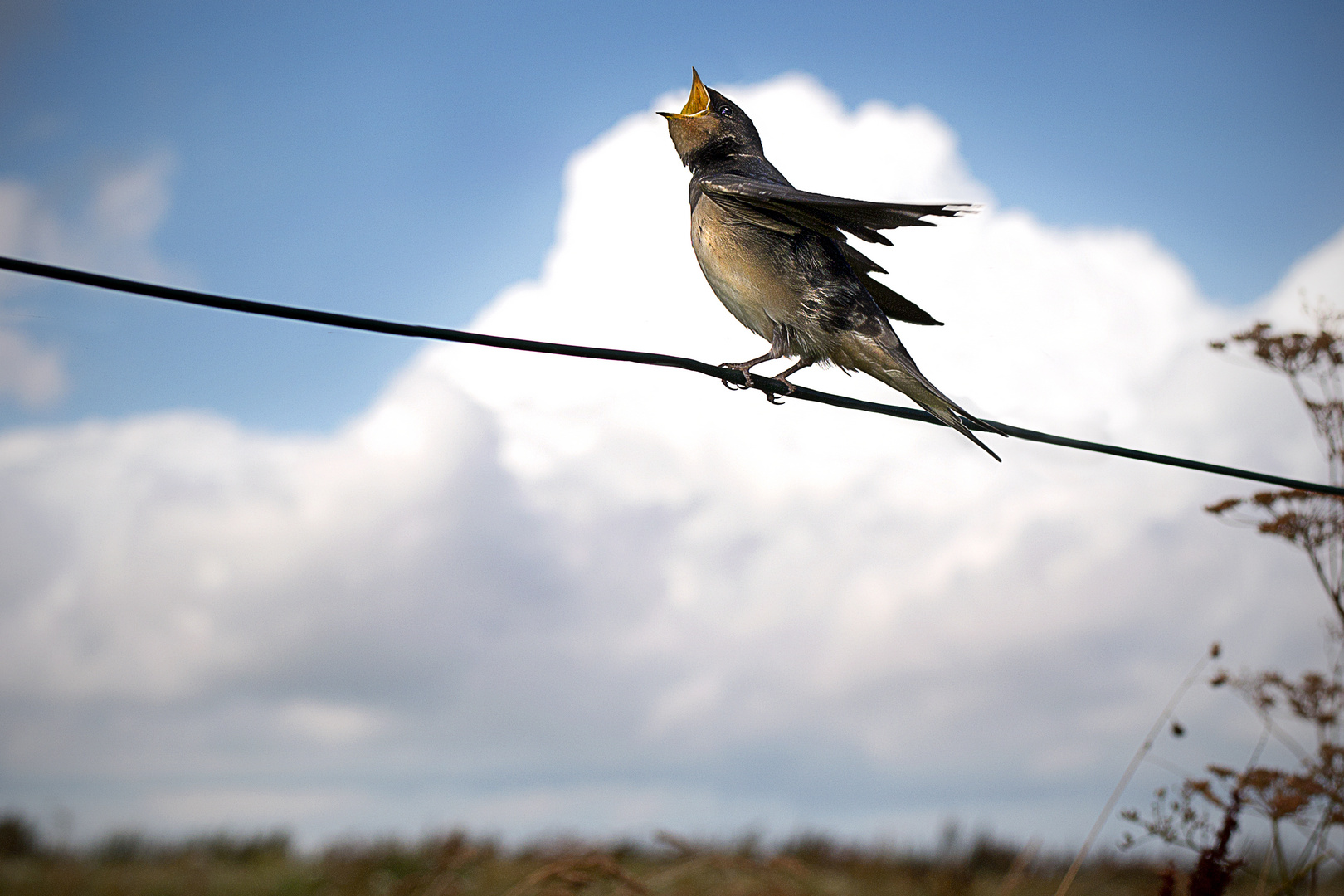 Nordseevogel