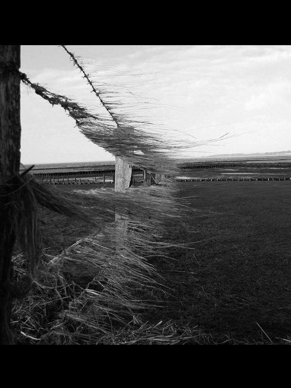 Nordseewind