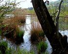 Nos 3 étangs / nuestros 3 estanques / Unsere 3 Teiche...3.02