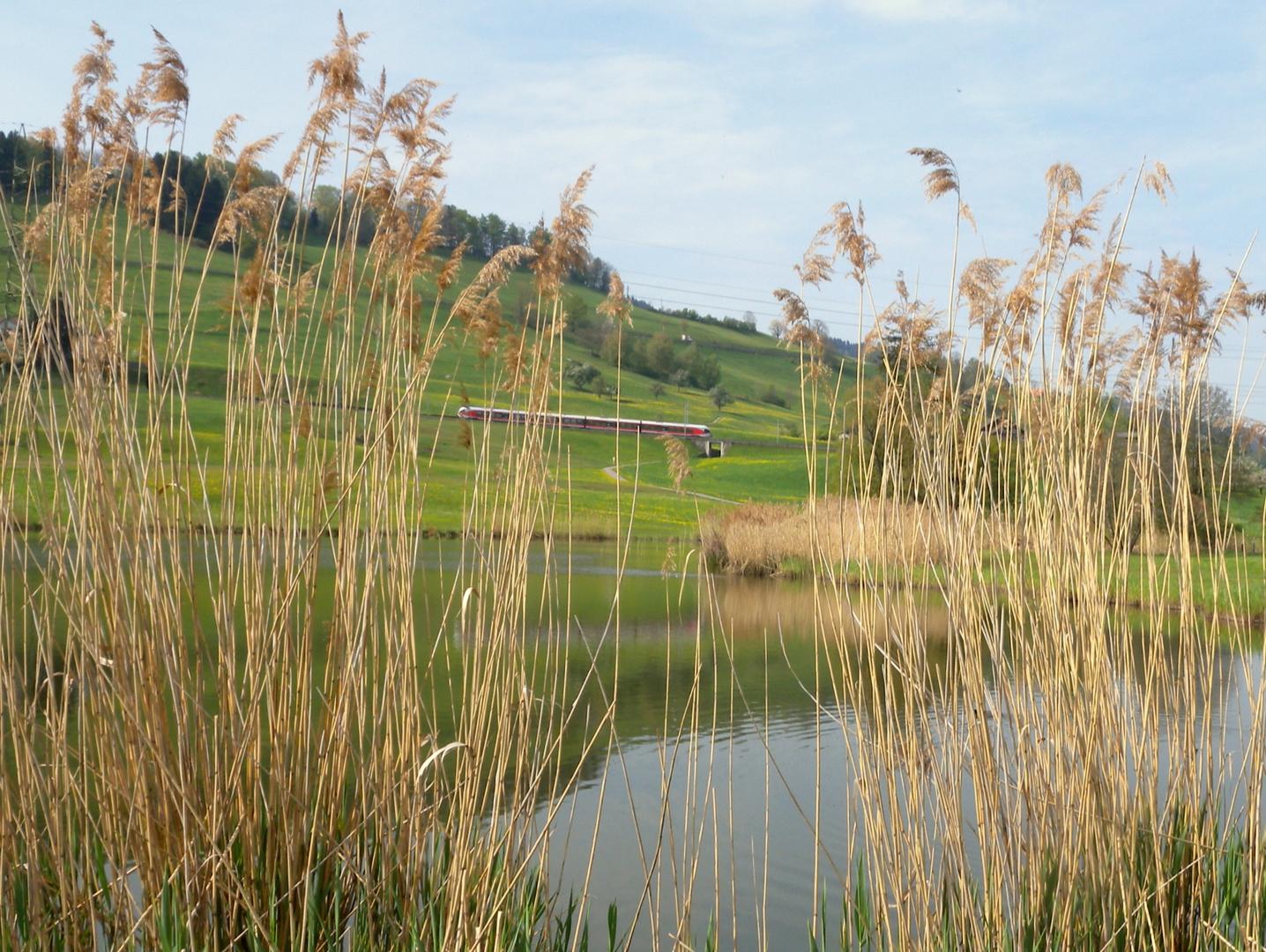 Nos 3 étangs / Nuestros 3 estanques / Unsere 3 Teiche...3.04