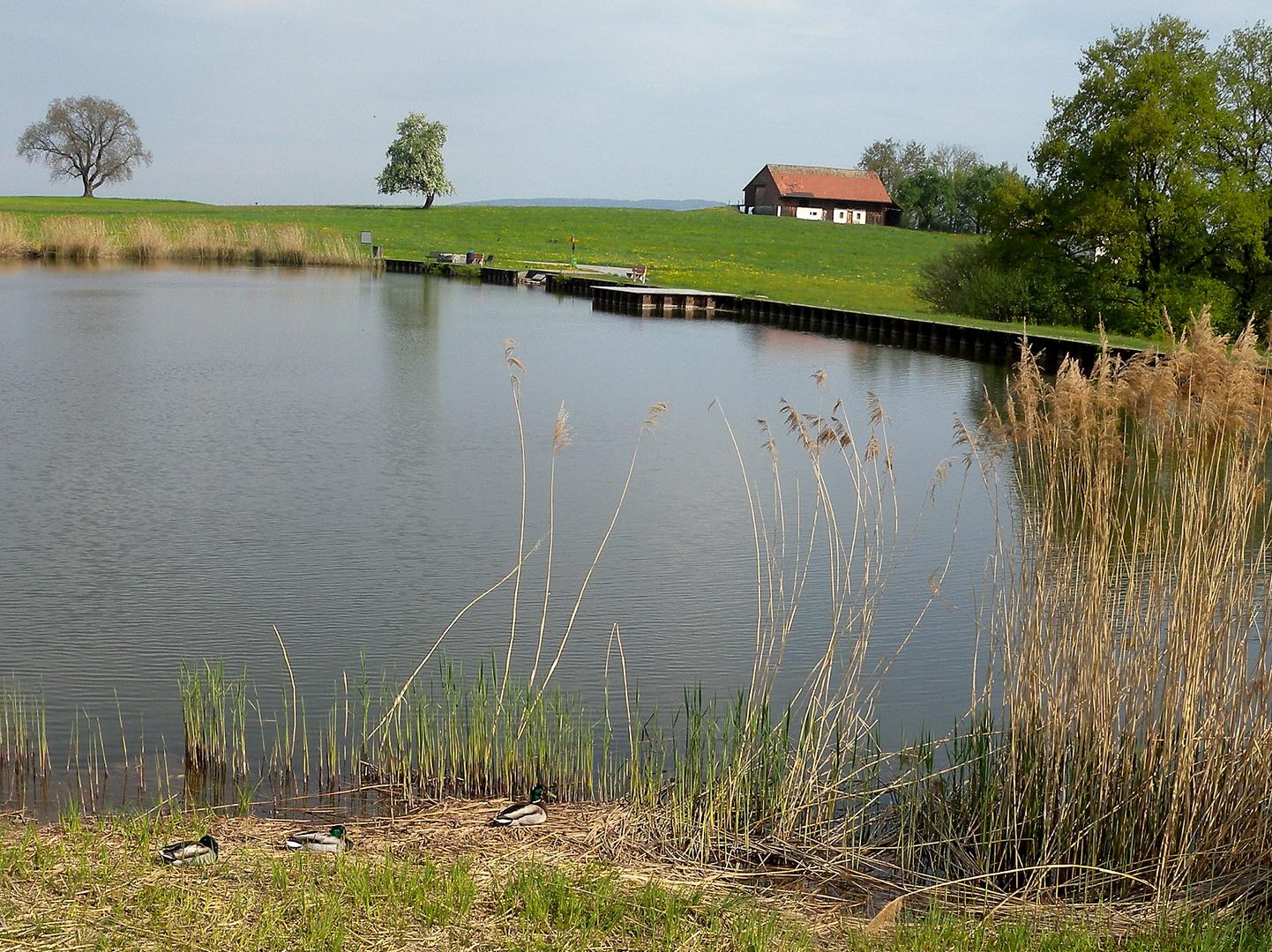 Nos 3 étangs / Nuestros 3estanques / Unsere 3 Teiche...3.03