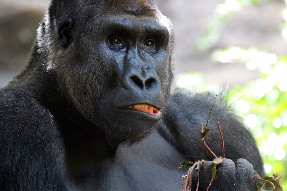 Not so King, der Kong...