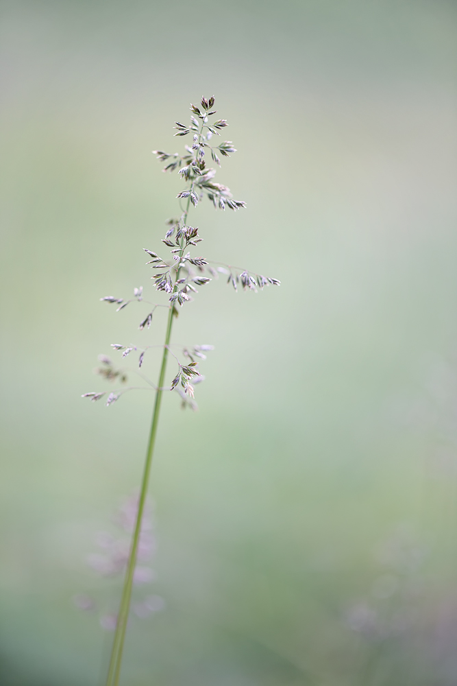 ...Nothing Special - Only Grass...