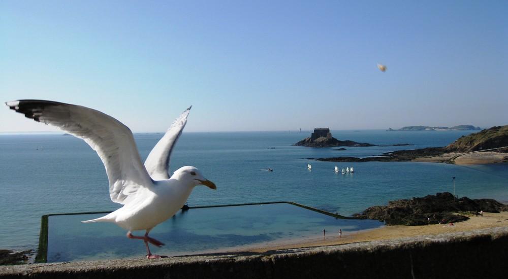 Notre amie la mouette à St Malo