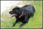 Notre chienne Saly