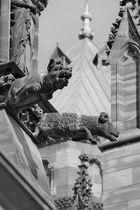 Notre Dame de Strasbourg - 09