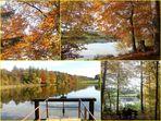 Notre étang / Nuestro estanque / Unser Teich..03