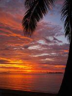 Noumea - Coucher de soleil au palmier - Sonnenuntergang mit Palmenbaum