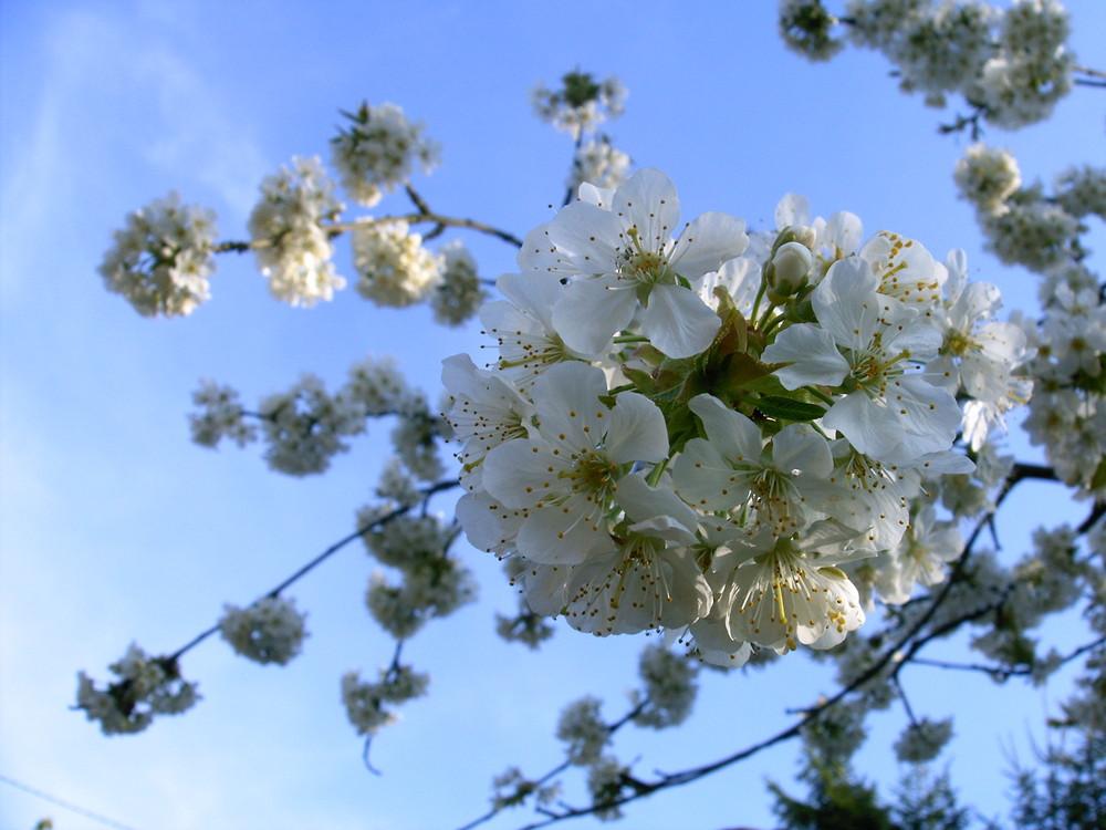 Nouveau printemps