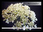 November 08