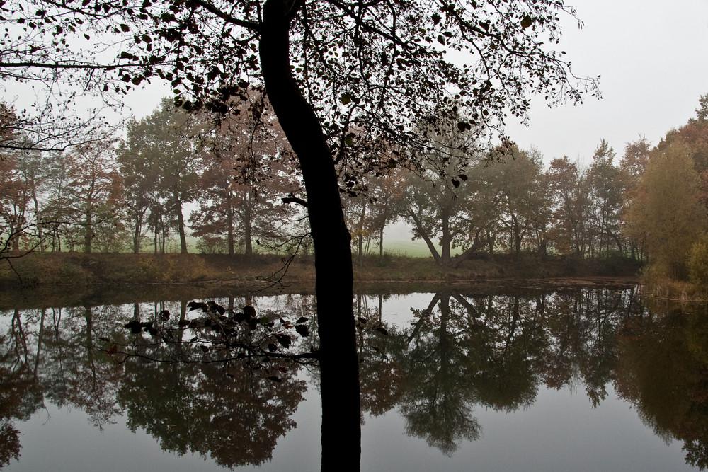 November am Teich