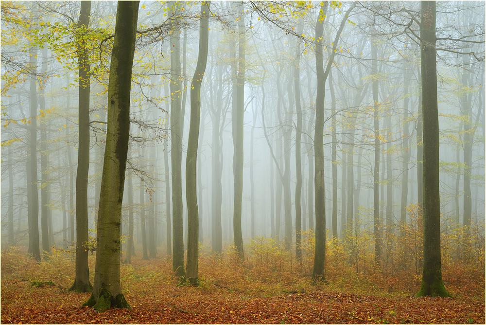 November-Buchen