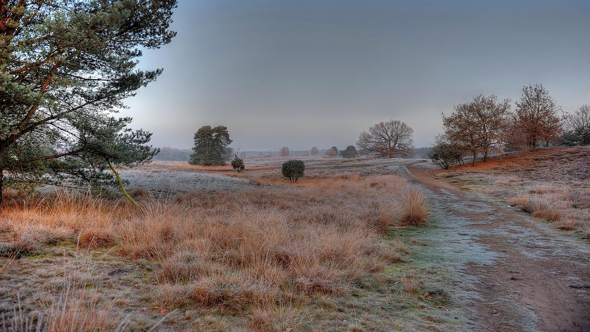 November-Heide