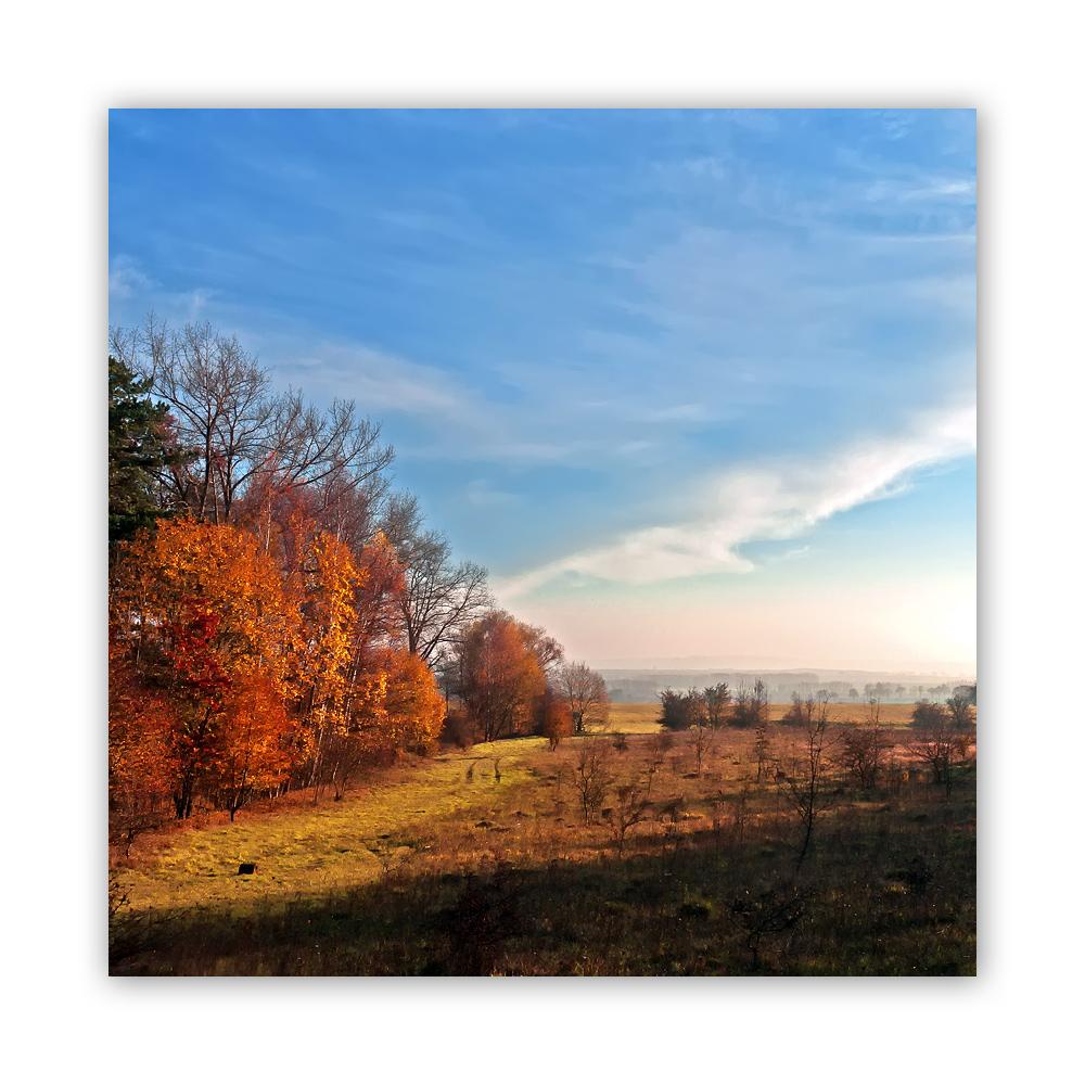 November im Hainich 2