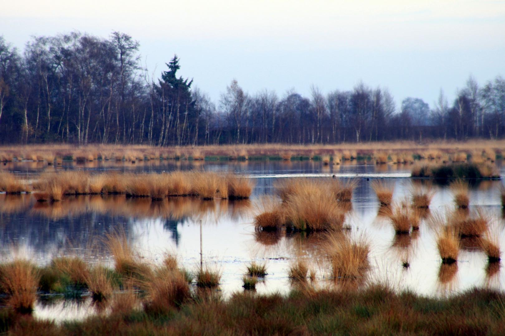 November im Moor
