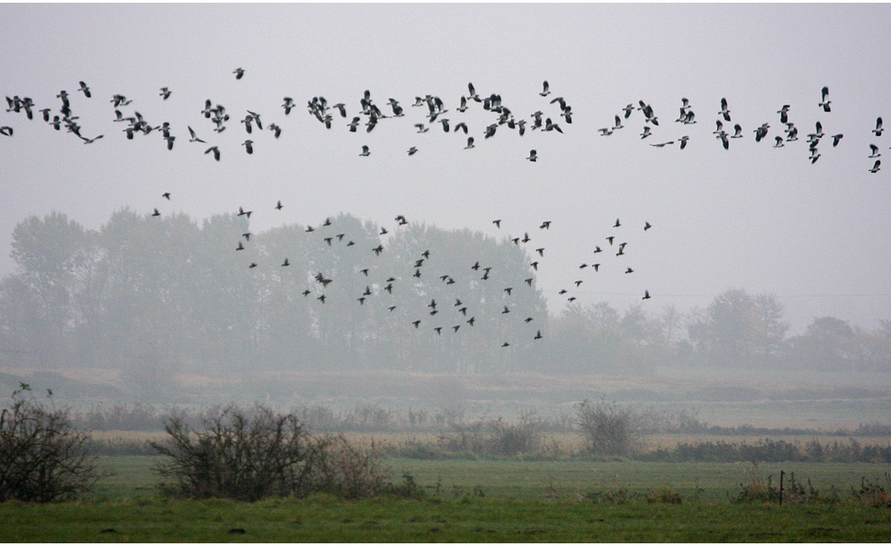 November im Moor (2)