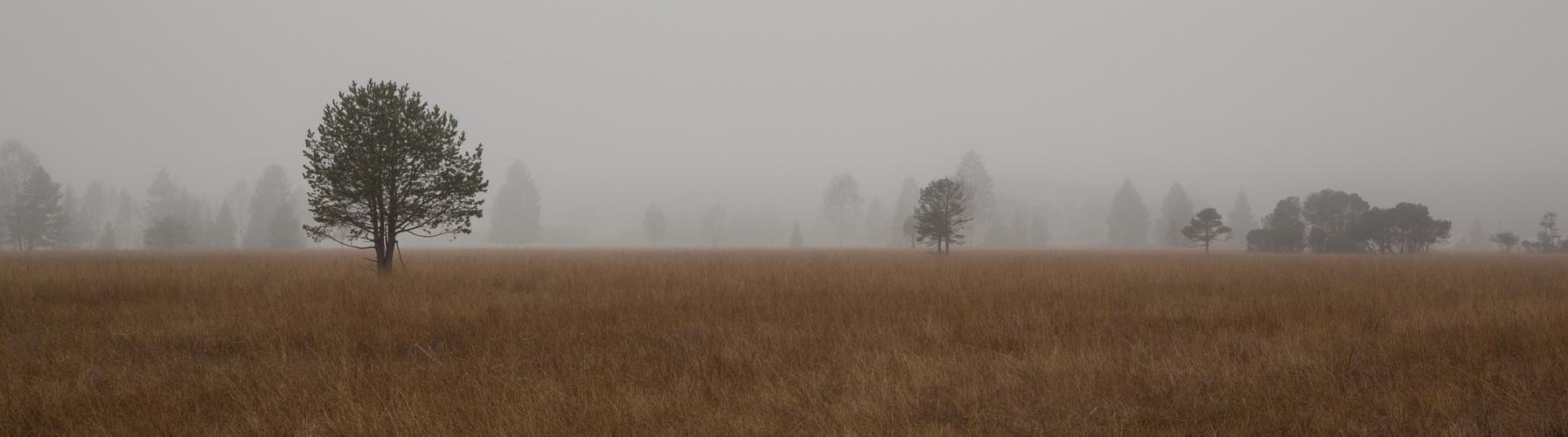 November im Murnauer Moor