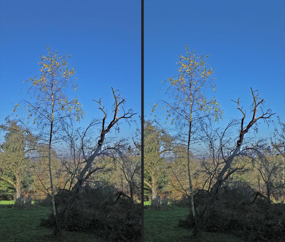 November-Licht und -Schatten hinterm Haus