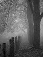 November-Nebel