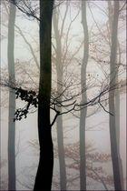 November-.Nebel