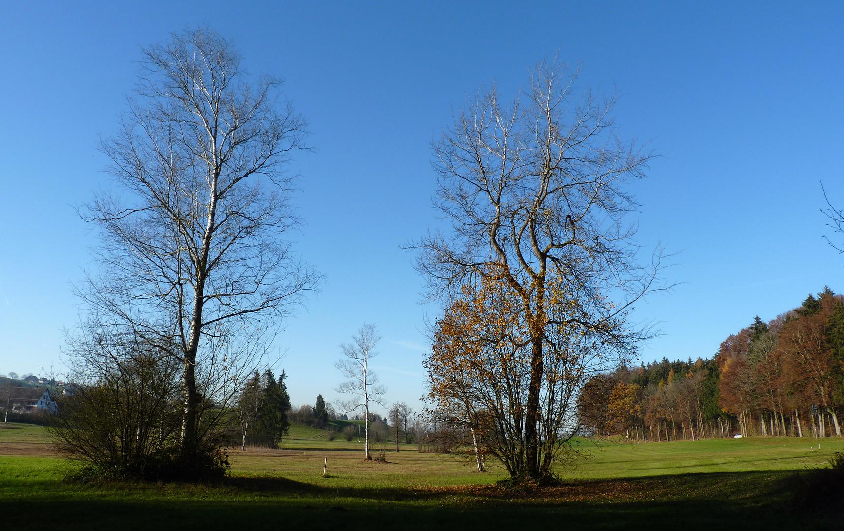November / Noviembre / Novembre 2011...05
