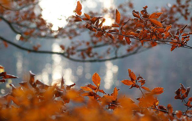 November-Wald (1)