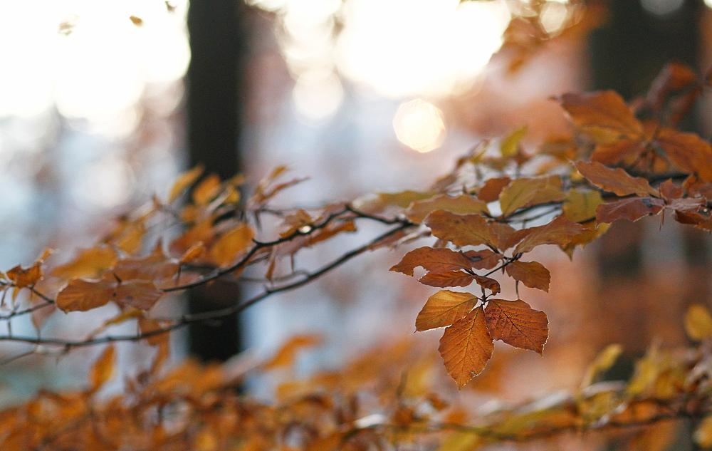 November-Wald (2)