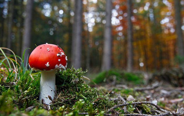 November-Wald (3)