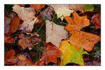 Novemberfarben