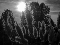 novembergräser