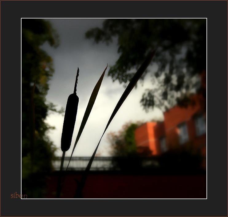 Novemberlicht - 2