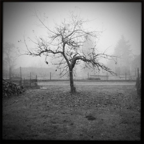 Novembermorgen mit Hipstamatic
