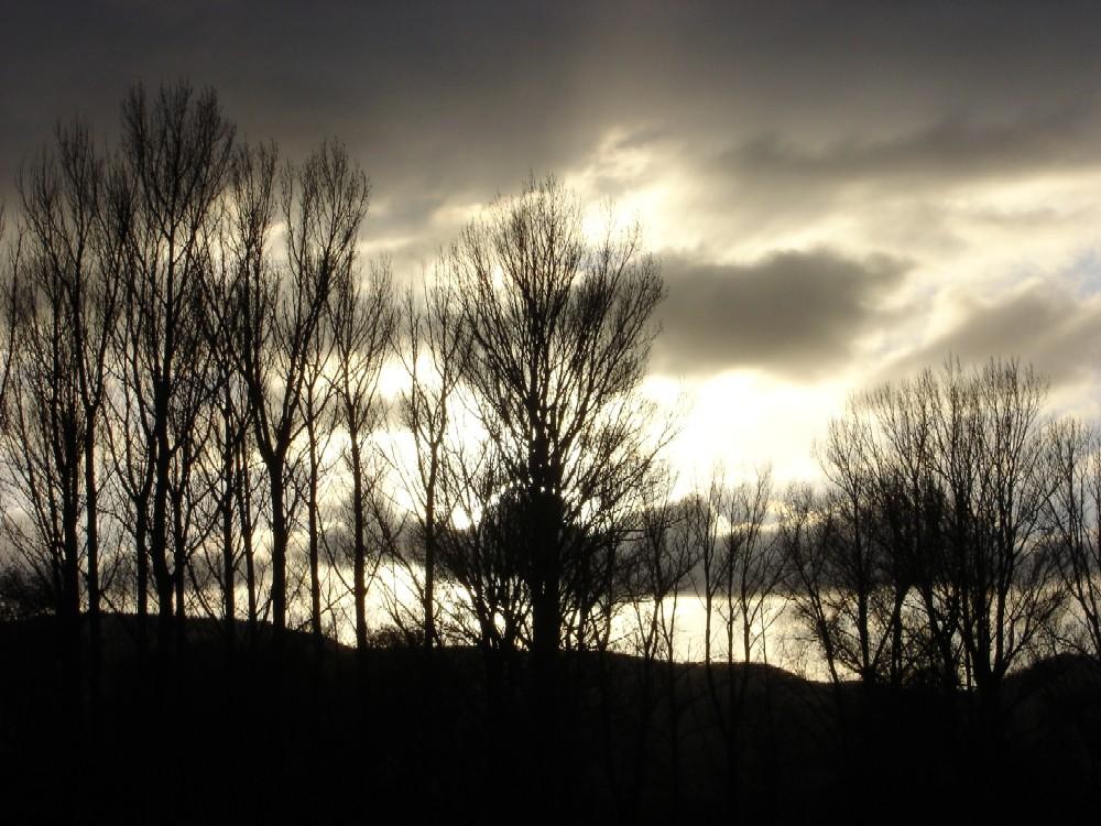 .......Novembernachmittag im Gegenlicht....