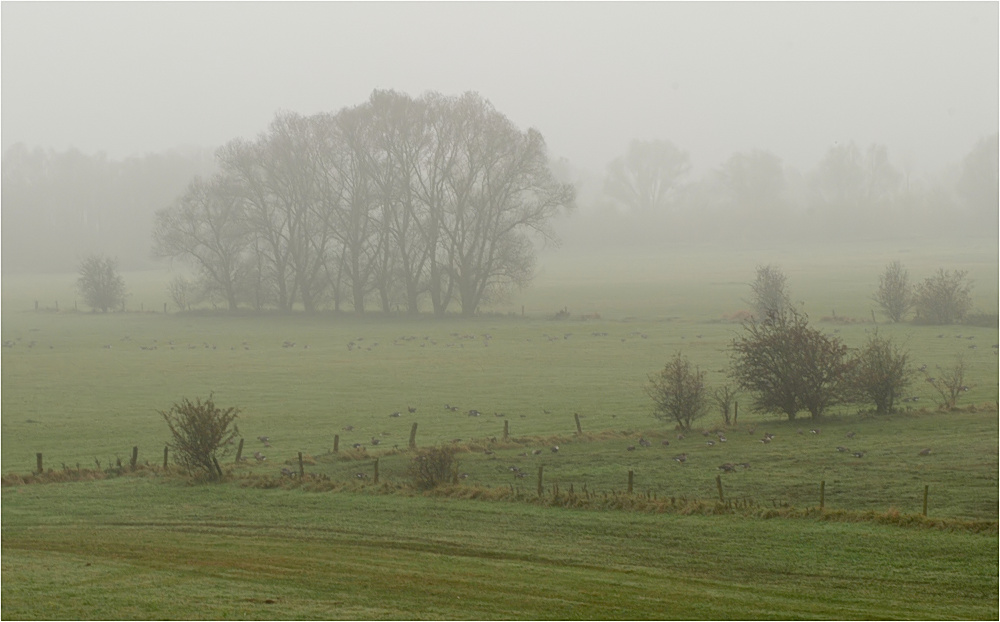 Novembernebel am Niederrhein