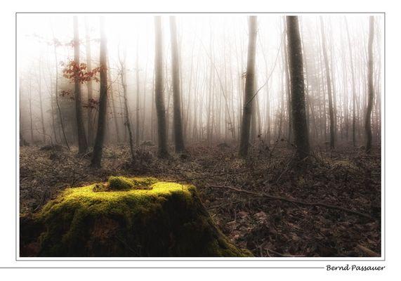 Novemberstimmung im Wald