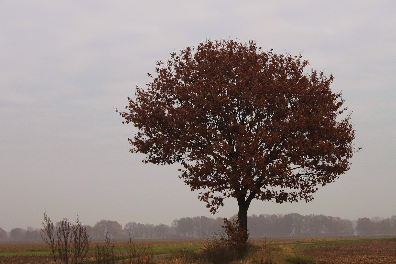 Novembertag im Wendland .....