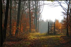Novemberwald *3*