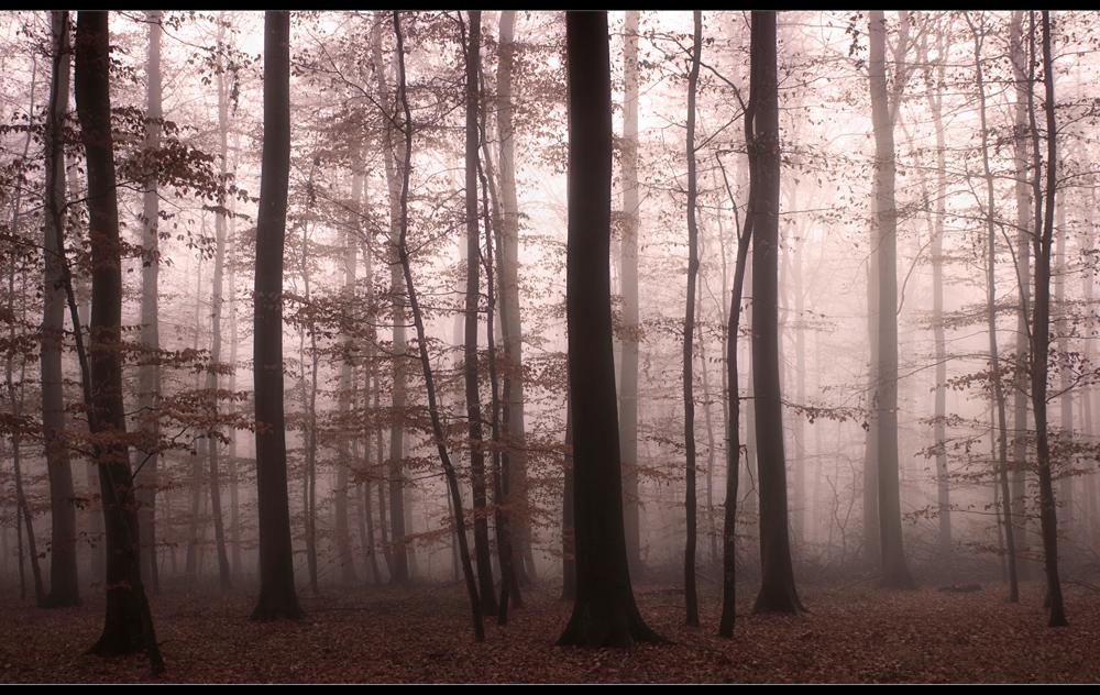 ..Novemberwald....