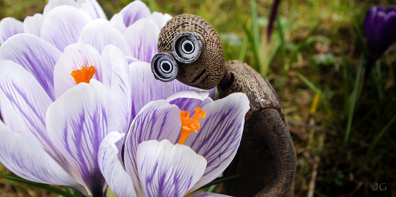 Nr. 9 erlebt den ersten Frühling ;o)
