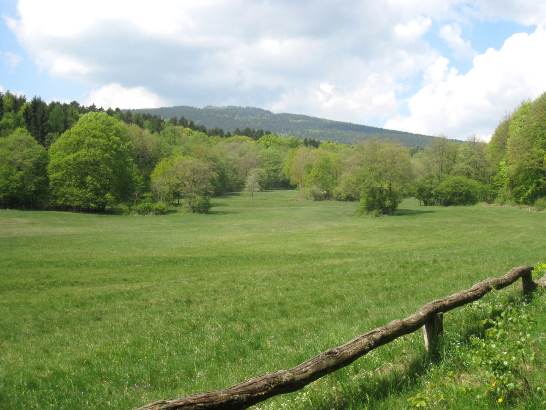 NSG Hühnerbergwiesen im April
