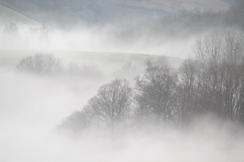 Nuages en forêt basque