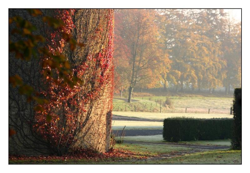 Nuances d'automne 1